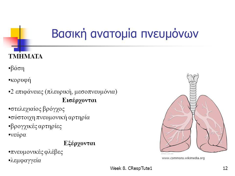 Βασική ανατομία πνευμόνων