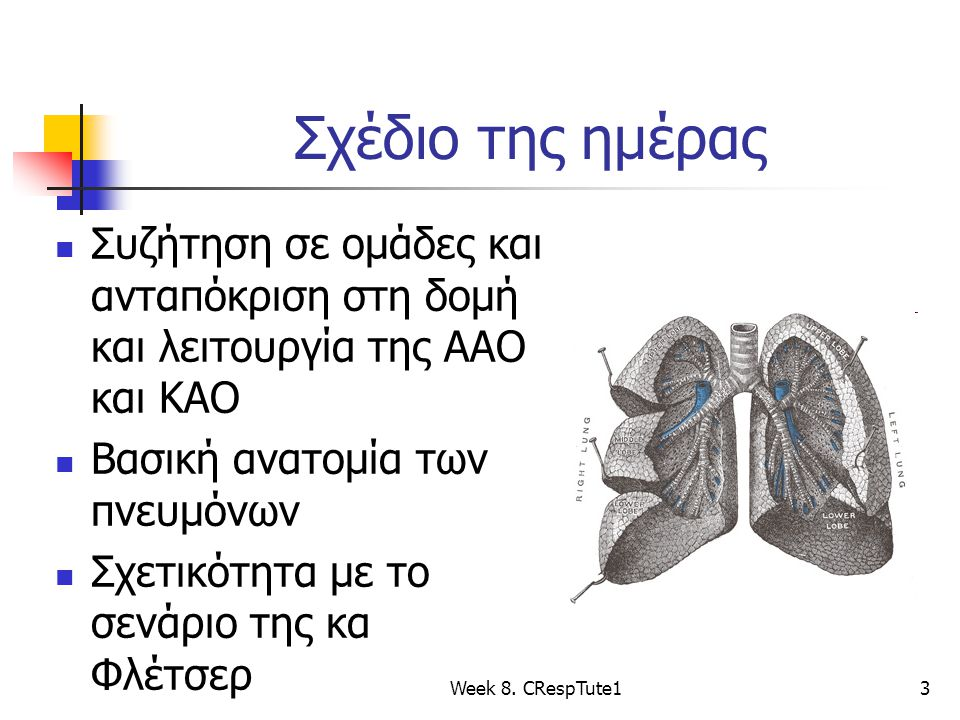Σχέδιο της ημέρας Συζήτηση σε ομάδες και ανταπόκριση στη δομή και λειτουργία της ΑΑΟ και ΚΑΟ. Βασική ανατομία των πνευμόνων.