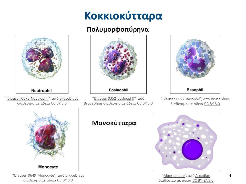 Επίχρισμα ΜΥΕΛΟΣ ΠΕΡΙΦΕΡΙΚΟ ΑΙΜΑ Αρχέγονο κύτταρο Δεξαμενή 10πλάσια