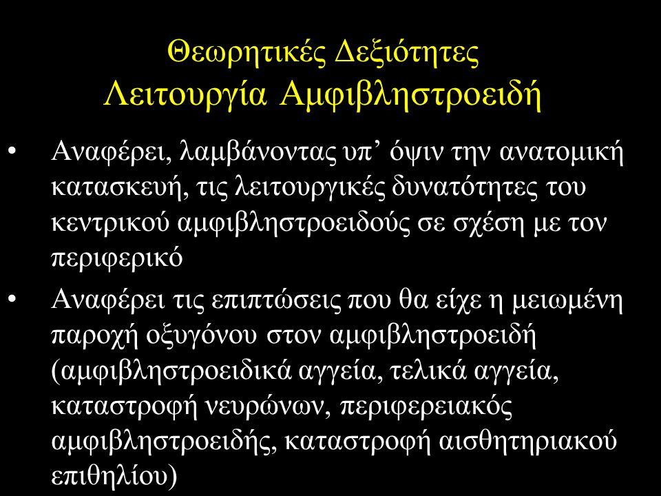 Θεωρητικές Δεξιότητες Λειτουργία Αμφιβληστροειδή