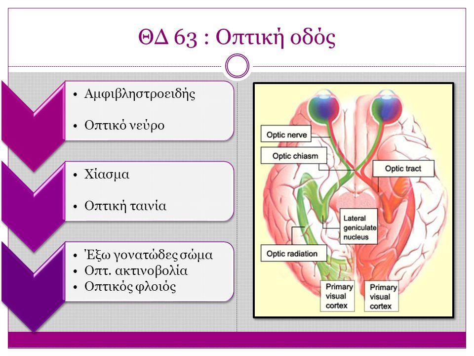 ΘΔ 63 : Οπτική οδός Αμφιβληστροειδής. Οπτικό νεύρο. Χίασμα. Οπτική ταινία. Έξω γονατώδες σώμα. Οπτ. ακτινοβολία.