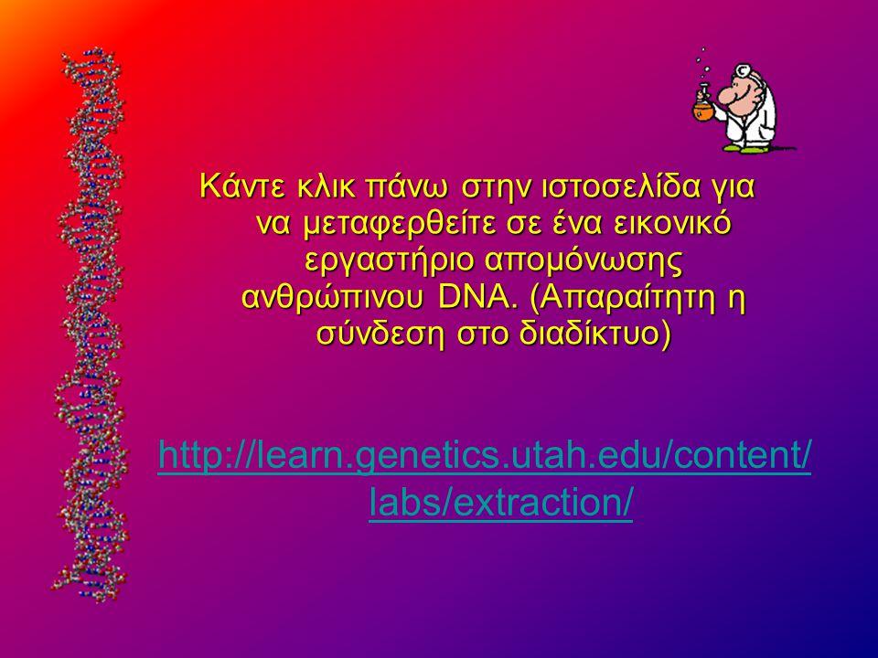 Kάντε κλικ πάνω στην ιστοσελίδα για να μεταφερθείτε σε ένα εικονικό εργαστήριο απομόνωσης ανθρώπινου DNA. (Απαραίτητη η σύνδεση στο διαδίκτυο)