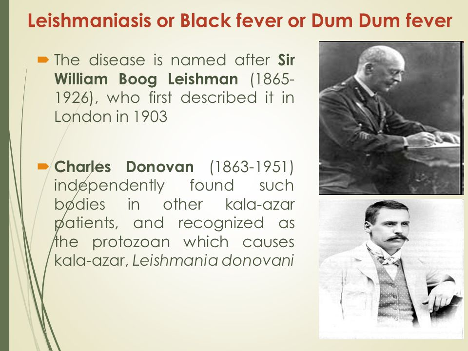 Leishmaniasis or Black fever or Dum Dum fever