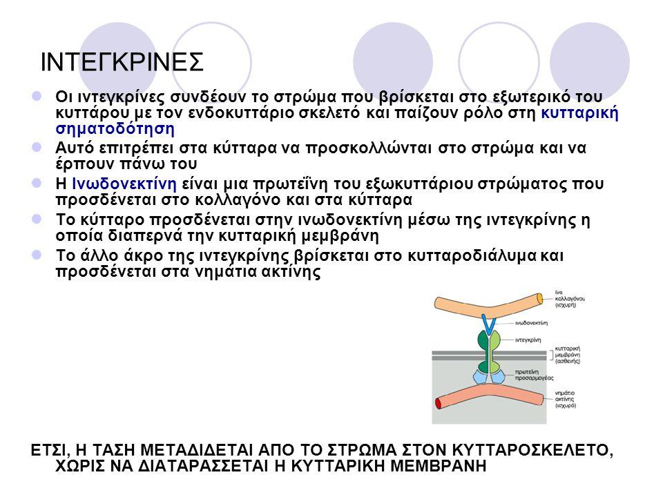 ΙΝΤΕΓΚΡΙΝΕΣ
