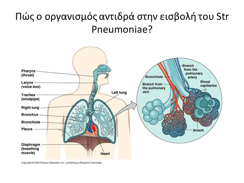 Πώς ο οργανισμός αντιδρά στην εισβολή του Str Pneumoniae