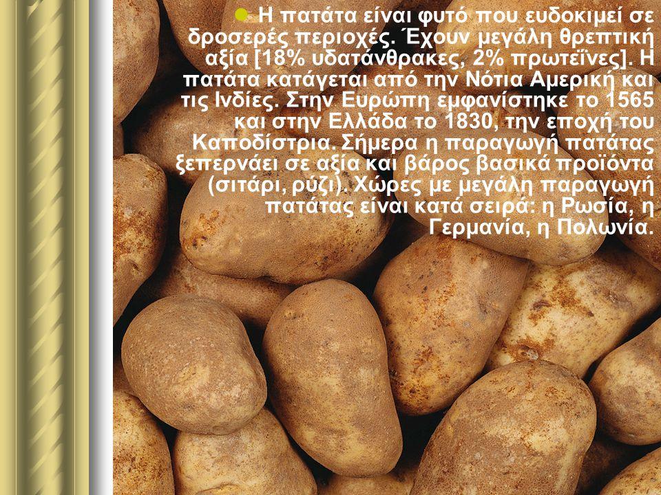 Η πατάτα είναι φυτό που ευδοκιμεί σε δροσερές περιοχές