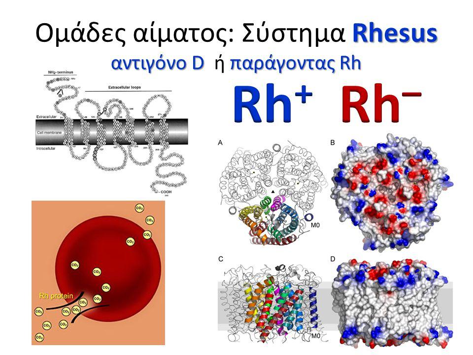 Ομάδες αίματος: Σύστημα Rhesus