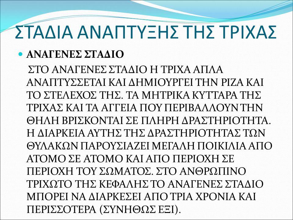 ΣΤΑΔΙΑ ΑΝΑΠΤΥΞΗΣ ΤΗΣ ΤΡΙΧΑΣ