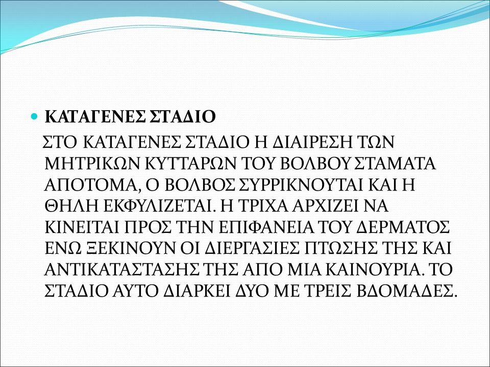 ΚΑΤΑΓΕΝΕΣ ΣΤΑΔΙΟ