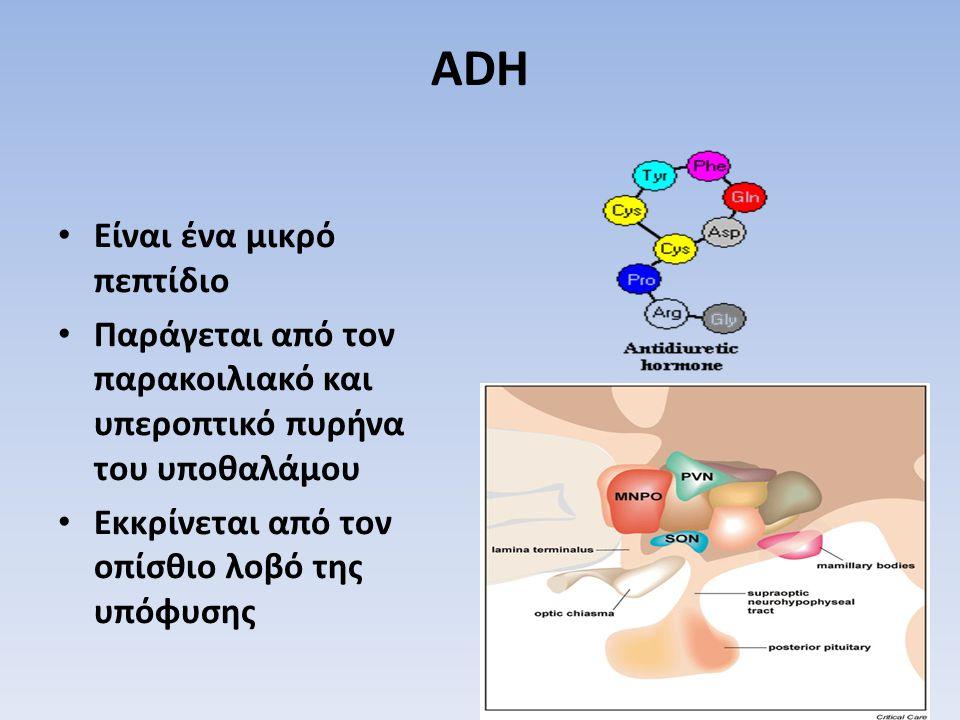 ADH Είναι ένα μικρό πεπτίδιο