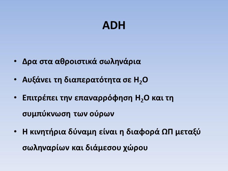 ADH Δρα στα αθροιστικά σωληνάρια Αυξάνει τη διαπερατότητα σε H2O