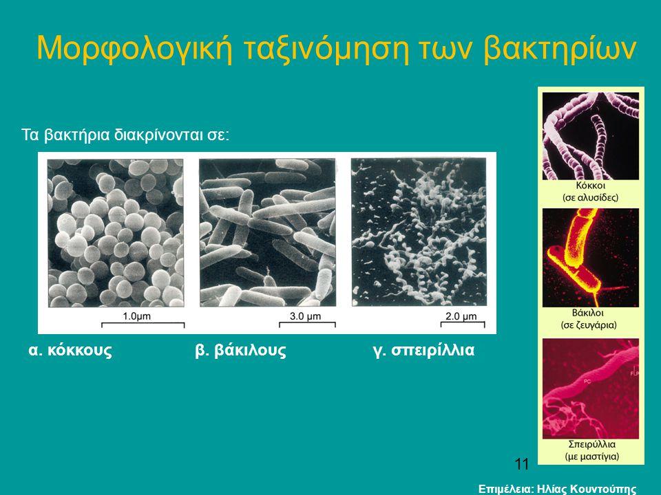 Μορφολογική ταξινόμηση των βακτηρίων