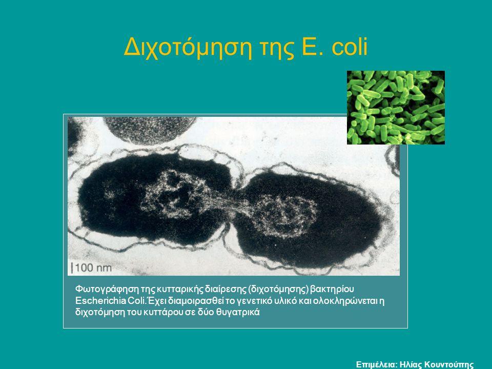 Διχοτόμηση της E. coli