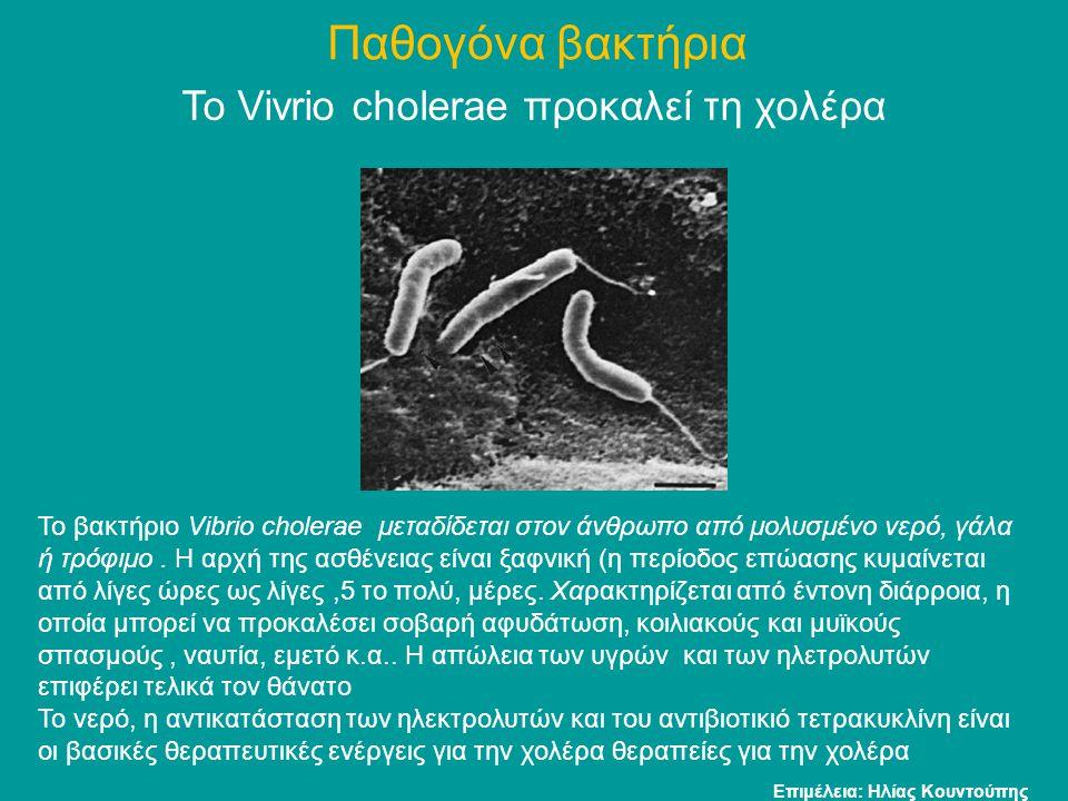 Το Vivrio cholerae προκαλεί τη χολέρα