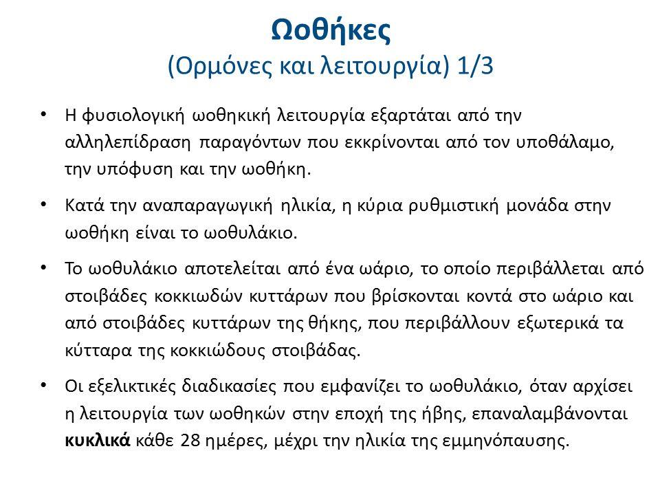 Ωοθήκες (Ορμόνες και λειτουργία) 2/3