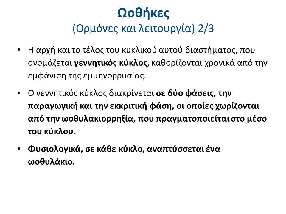 Ωοθήκες (Ορμόνες και λειτουργία) 3/3