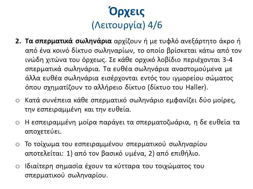 Όρχεις (Λειτουργία) 5/6