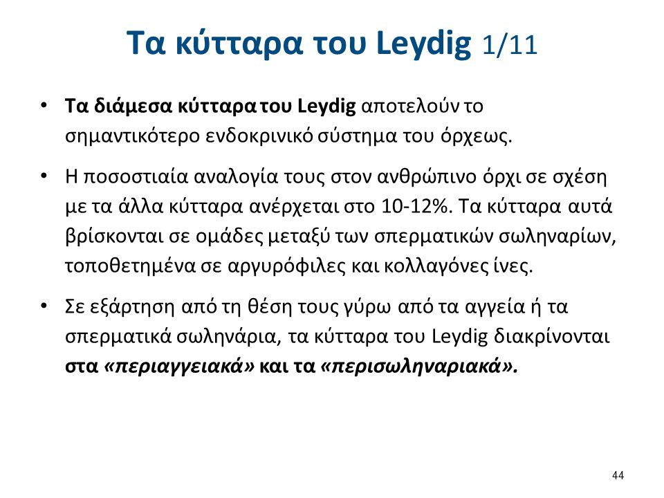 Τα κύτταρα του Leydig 2/11