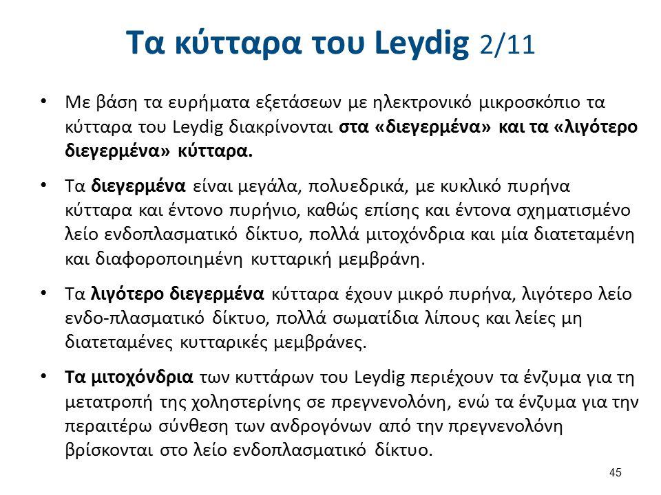 Τα κύτταρα του Leydig 3/11