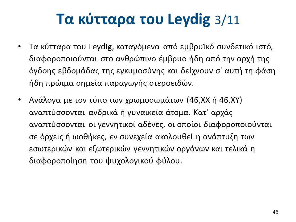 Τα κύτταρα του Leydig 4/11