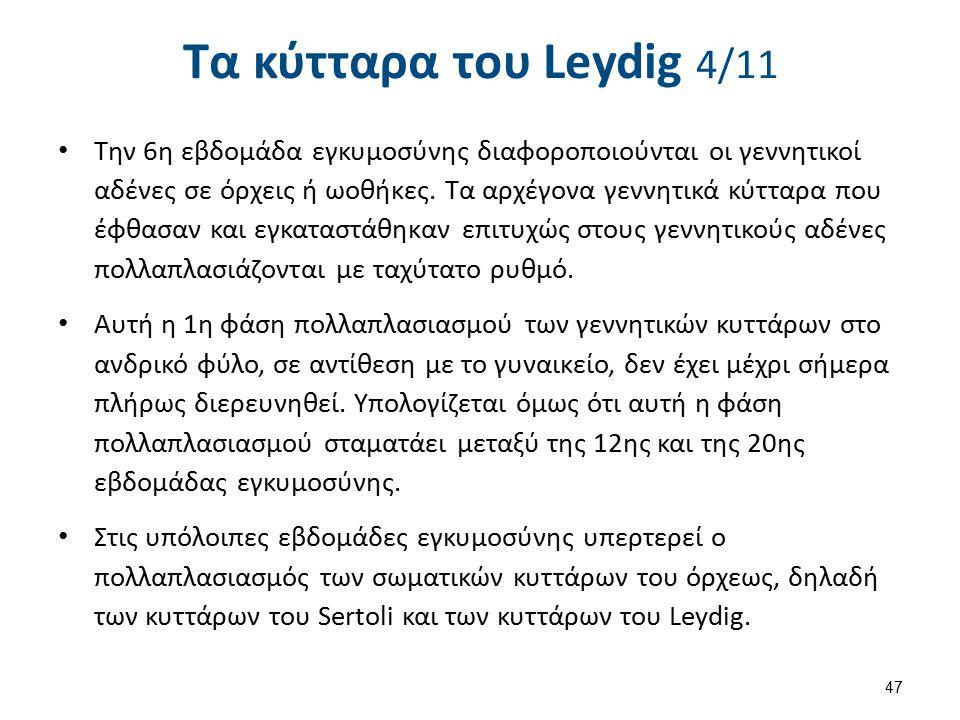 Τα κύτταρα του Leydig 5/11