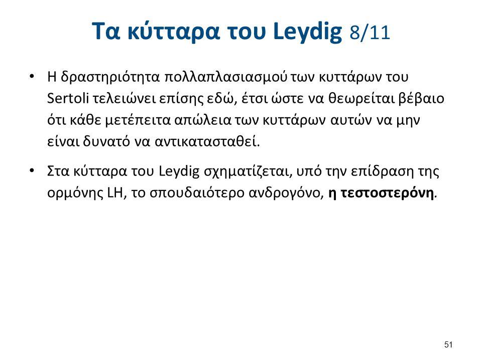 Τα κύτταρα του Leydig 9/11
