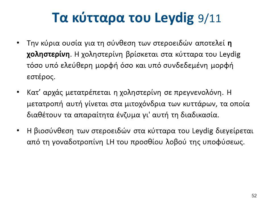 Τα κύτταρα του Leydig 10/11