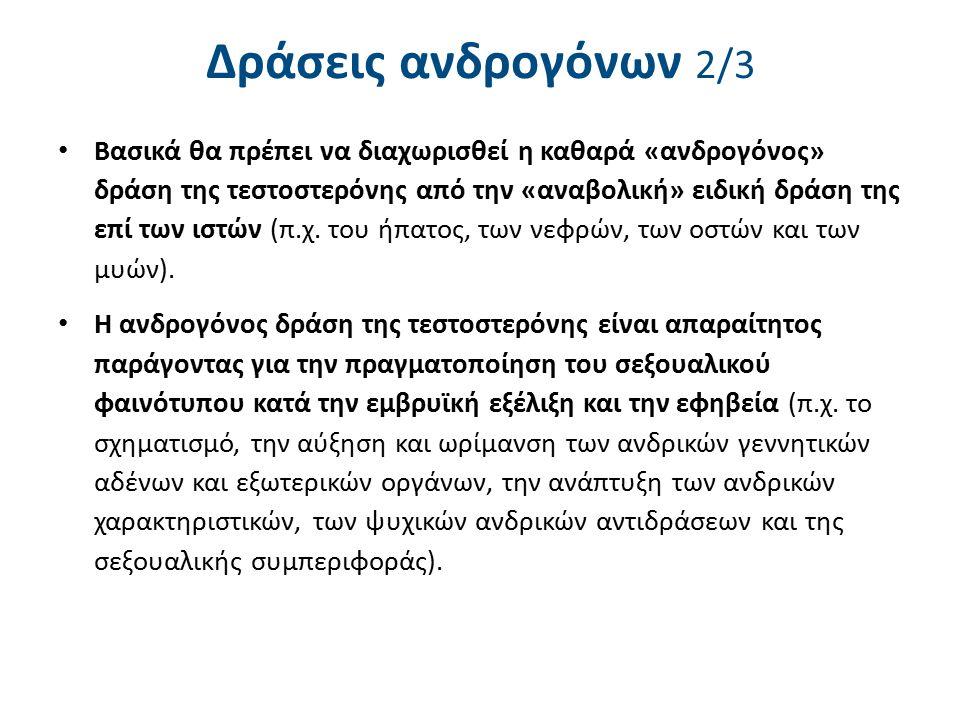 Δράσεις ανδρογόνων 3/3