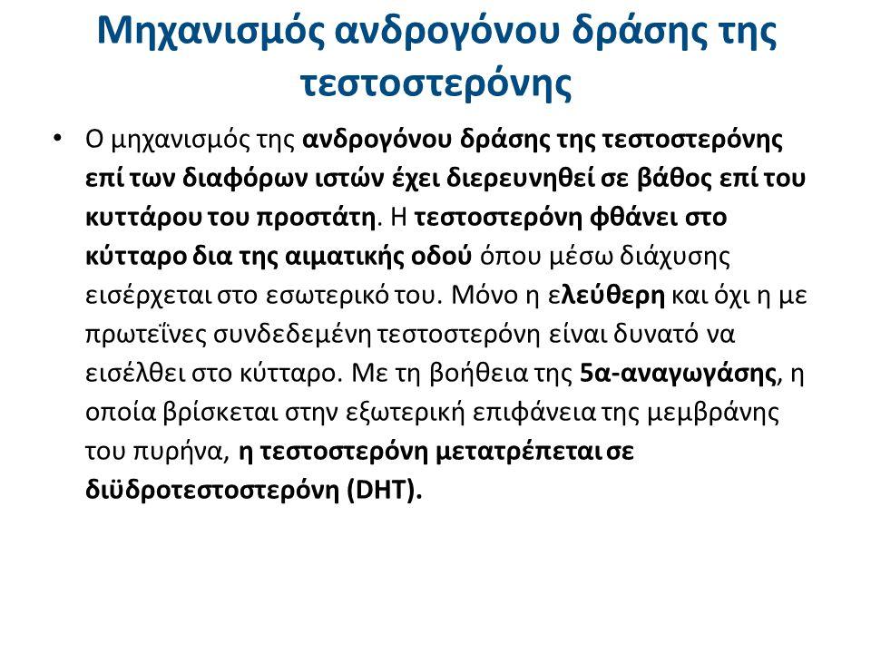 Μηχανισμός ανδρογόνου δράσης της DHT