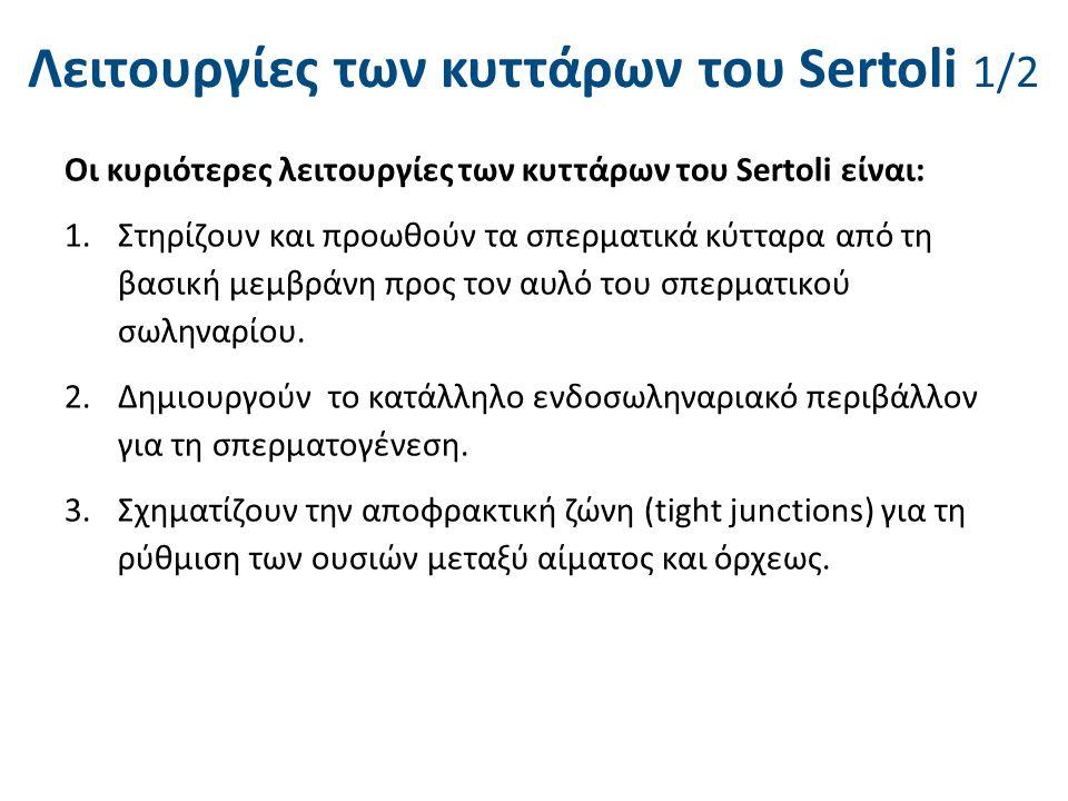 Λειτουργίες των κυττάρων του Sertoli 2/2