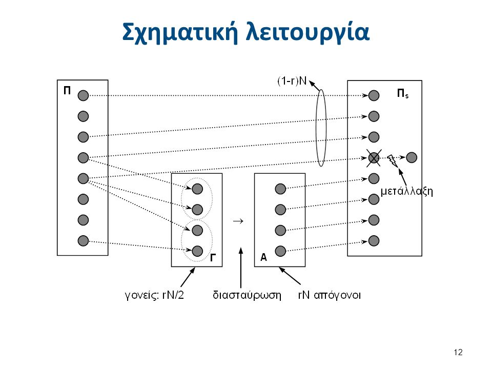 Αλγόριθμος λειτουργίας Γ.Α.