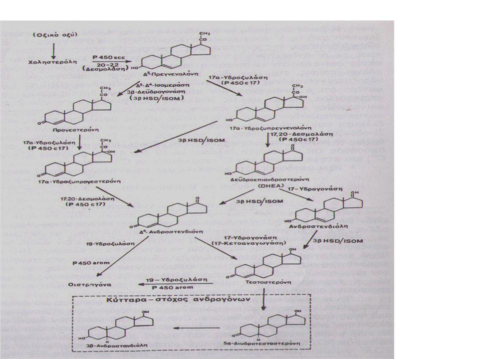 Βιοσύνθεση τεστοστερόνης