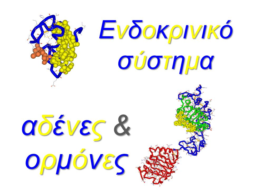Ενδοκρινικό σύστημα αδένες & ορμόνες