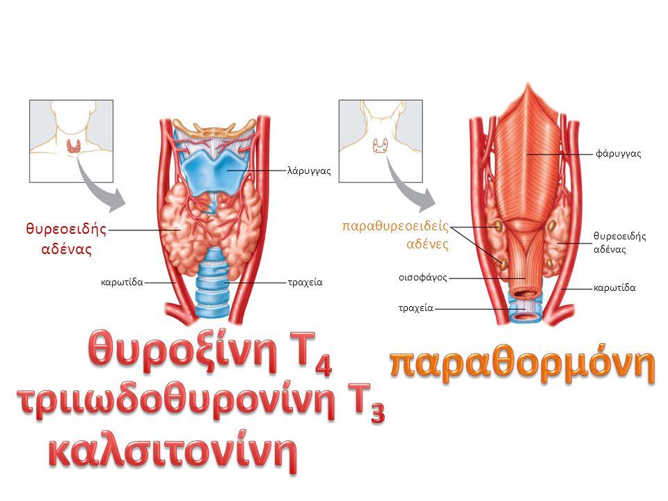 θυροξίνη Τ4 καλσιτονίνη