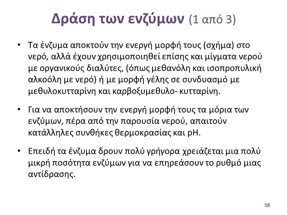 Δράση των ενζύμων (2 από 3)