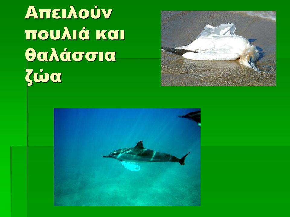 Απειλούν πουλιά και θαλάσσια ζώα