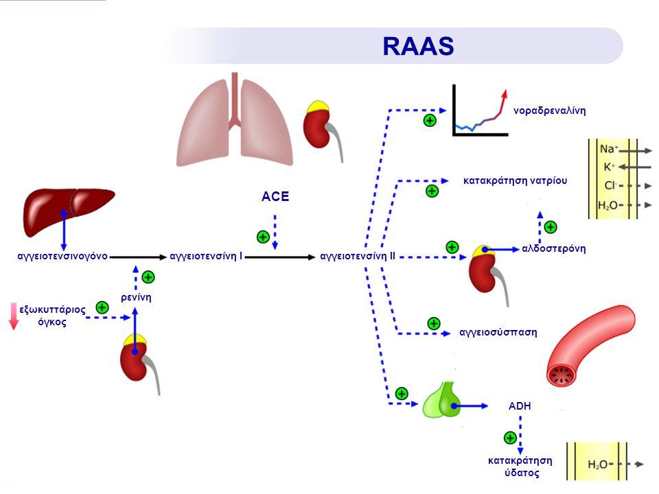 RAAS ACE νοραδρεναλίνη κατακράτηση νατρίου αλδοστερόνη