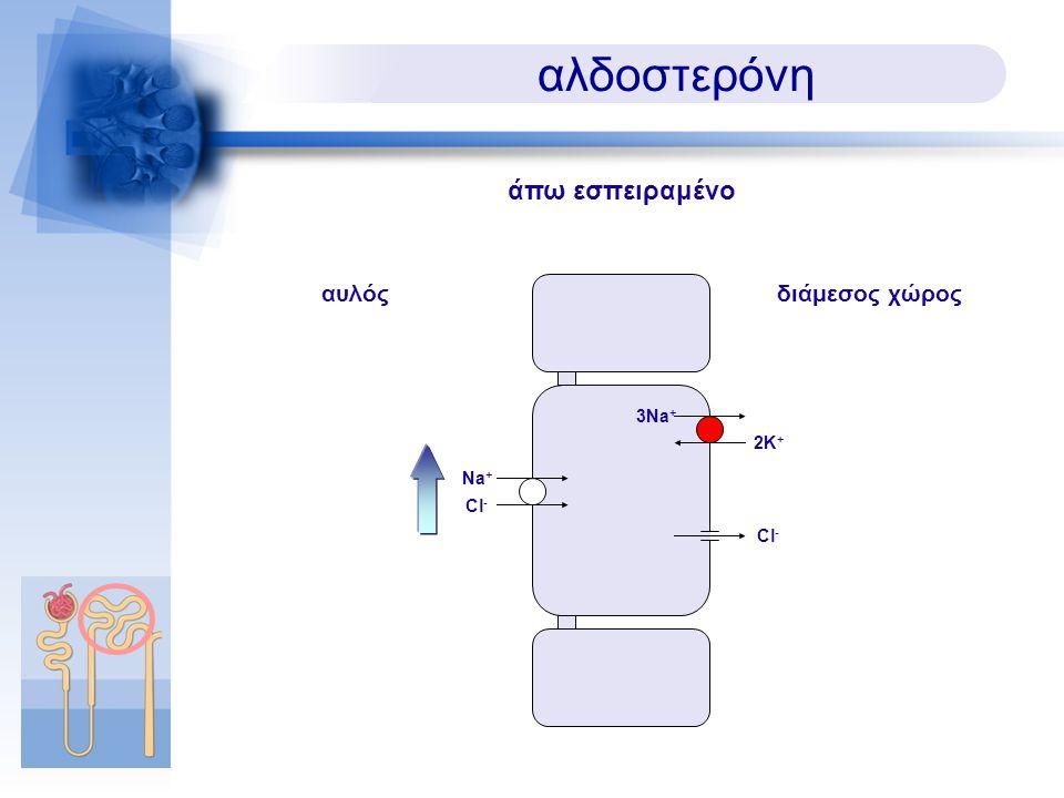 αλδοστερόνη άπω εσπειραμένο αυλός διάμεσος χώρος 3Na+ 2K+ Na+ Cl- Cl-