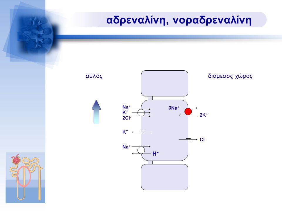 αδρεναλίνη, νοραδρεναλίνη