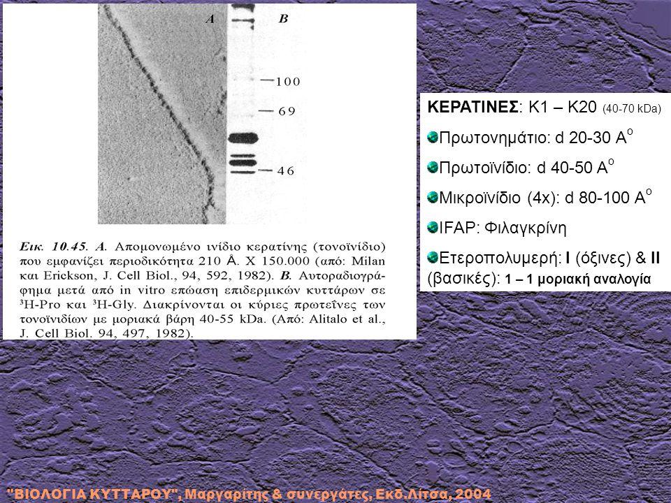 Ετεροπολυμερή: I (όξινες) & II (βασικές): 1 – 1 μοριακή αναλογία