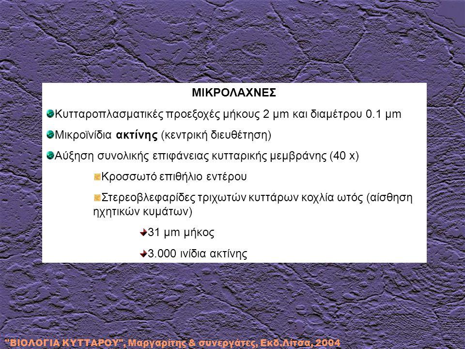 Κυτταροπλασματικές προεξοχές μήκους 2 μm και διαμέτρου 0.1 μm
