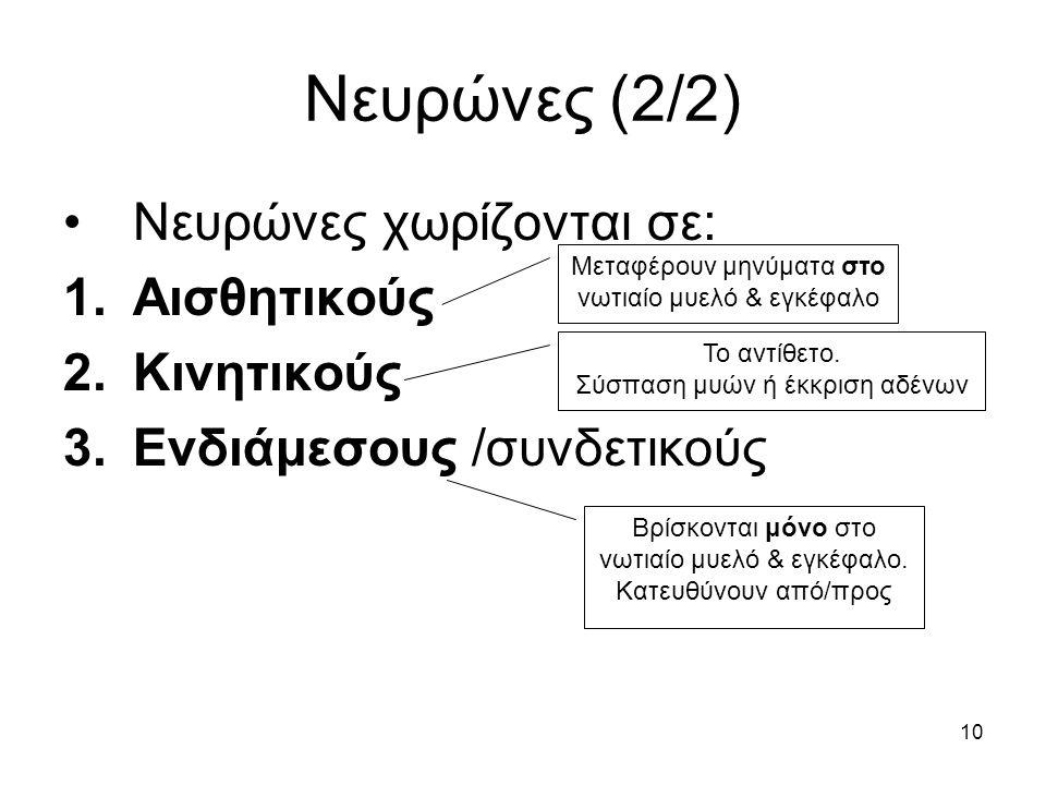 Νευρώνες (2/2) Νευρώνες χωρίζονται σε: Αισθητικούς Κινητικούς
