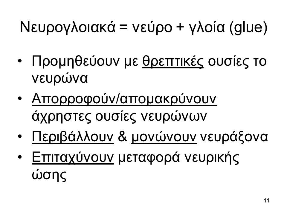 Νευρoγλοιακά = νεύρο + γλοία (glue)