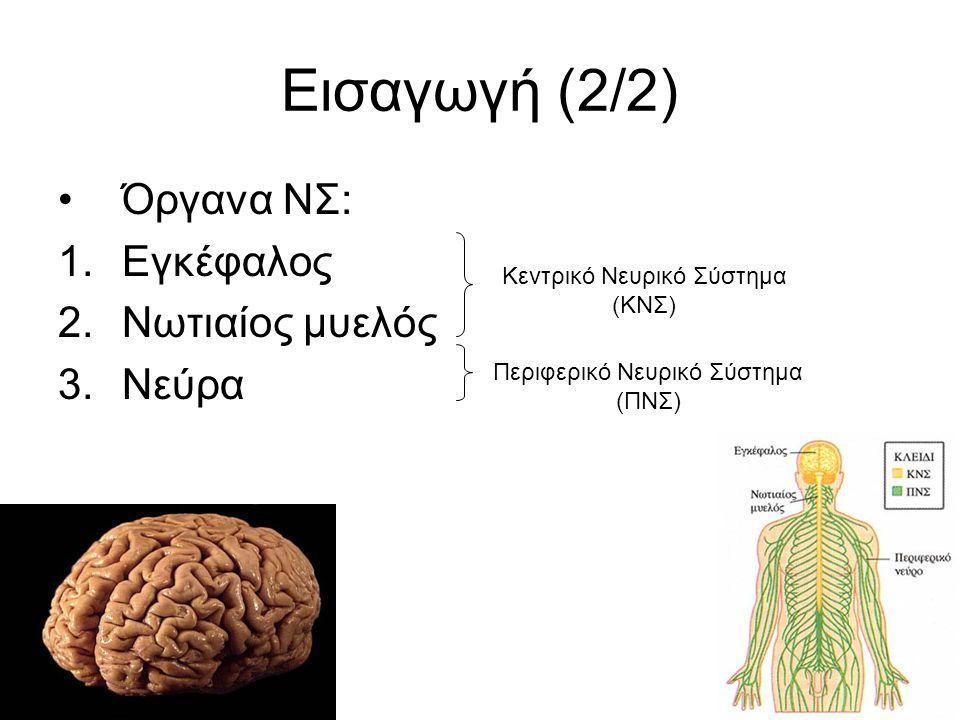 Εισαγωγή (2/2) Όργανα ΝΣ: Εγκέφαλος Νωτιαίος μυελός Νεύρα