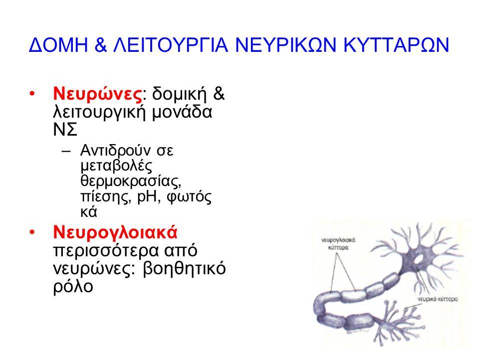 ΔΟΜΗ & ΛΕΙΤΟΥΡΓΙΑ ΝΕΥΡΙΚΩΝ ΚΥΤΤΑΡΩΝ