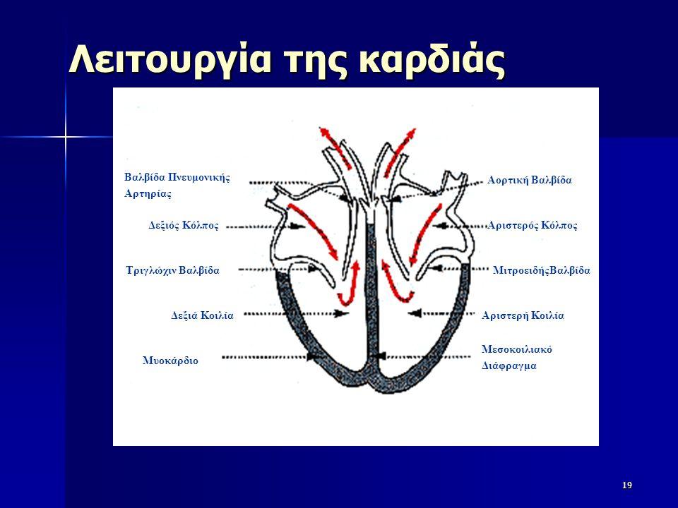 Λειτουργία της καρδιάς