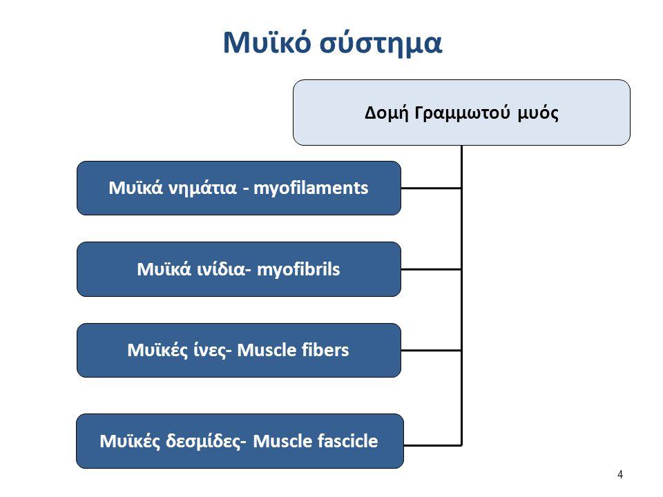 1007 Muscle Fibes (large) , από CFCF διαθέσιμο με άδεια CC BY 3.0