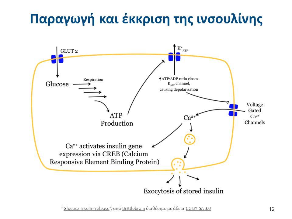 Δράση της ινσουλίνης στα κύτταρα
