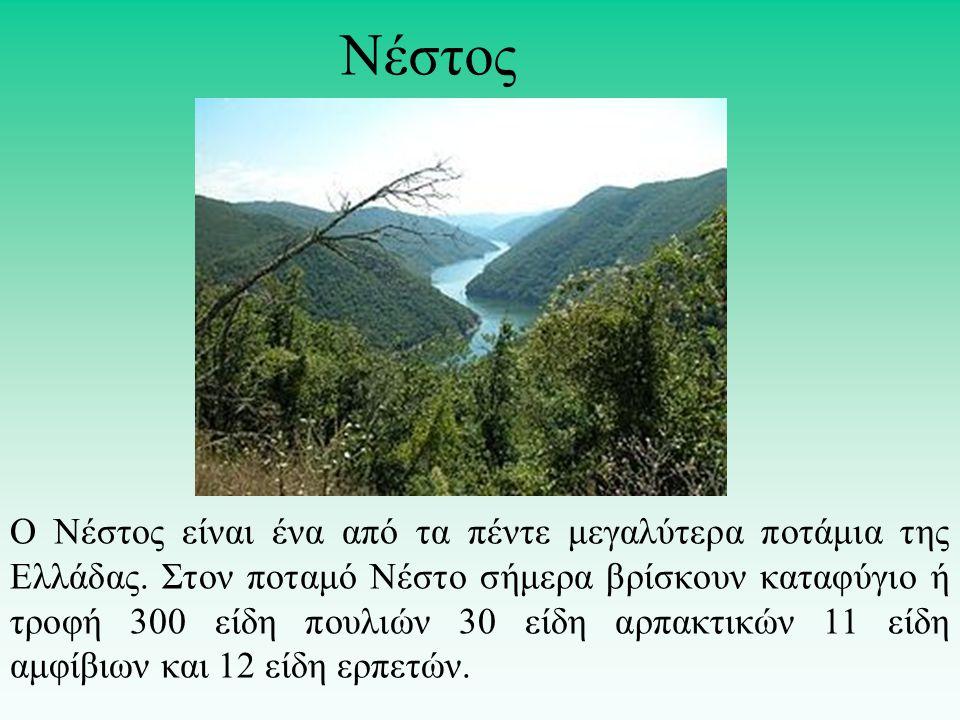 Νέστος