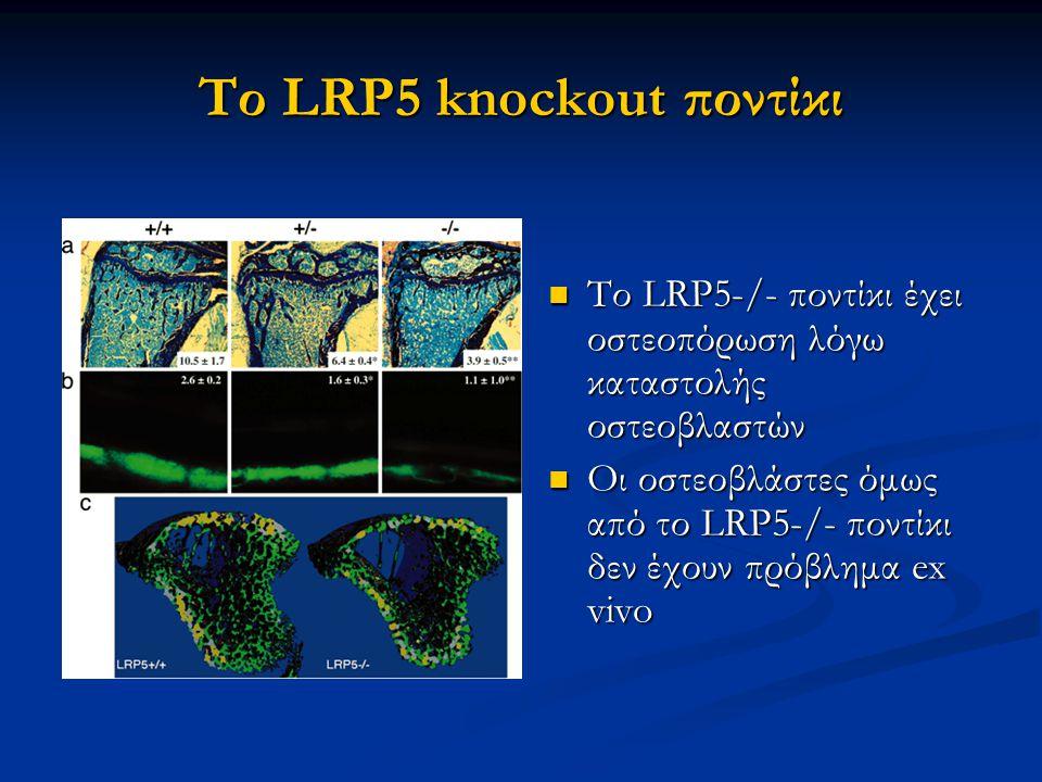 Το LRP5 knockout ποντίκι